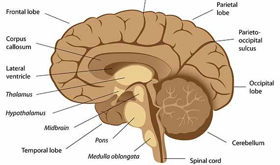 alzheimer stadier