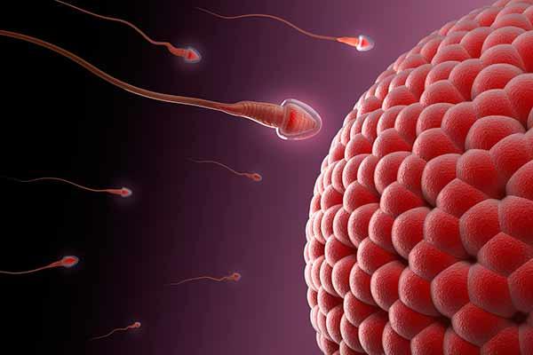 sædstyrke graviditet