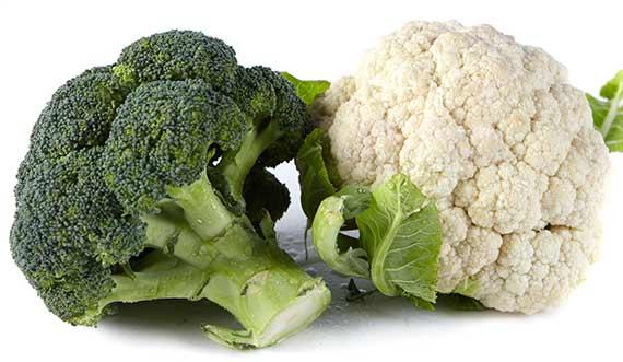 proteinfri kost