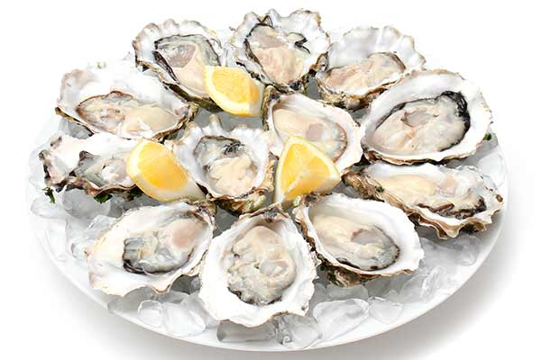 Oysters 81162511