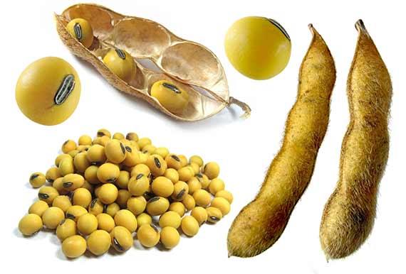 fødevarer med højt proteinindhold